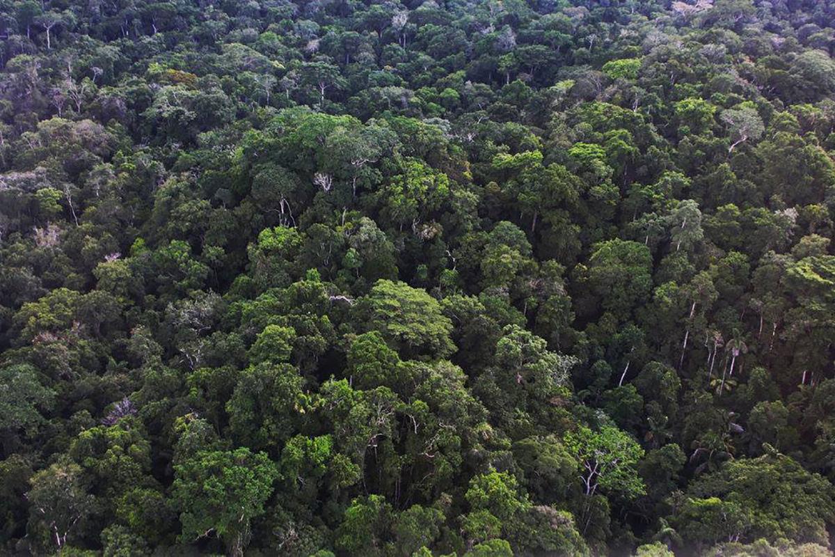 Reforestation inclusive avec Tristan Lecomte, de Pur Projet