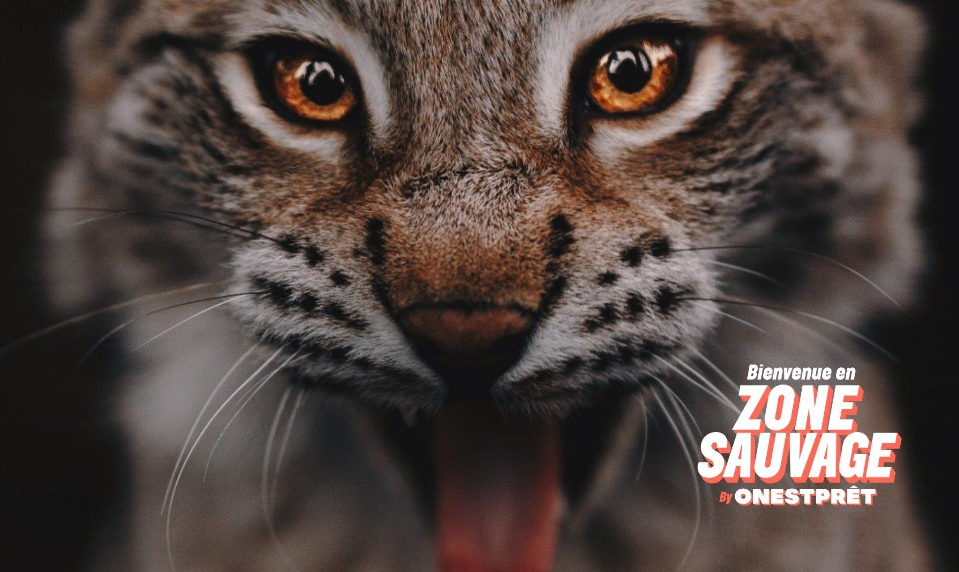Soirée de lancement On Est Prêt #ZoneSauvage
